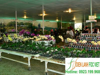 lắp đặt kho lạnh bảo quản hoa