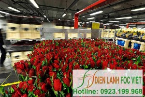 Lắp đặt kho lạnh bảo quản hoa tại công ty Anh Minh