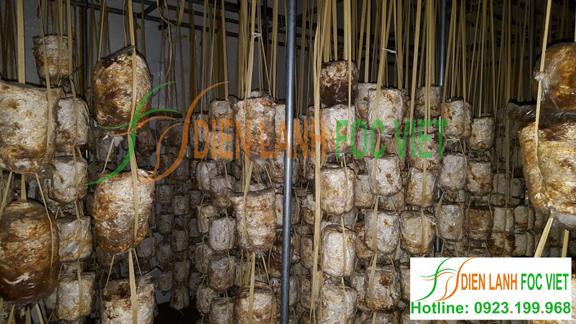 lắp đặt kho lạnh bảo quản nấm